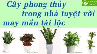 Những loại cây phong thủy trồng trong nhà tuyệt vời - May mắn tài lộc