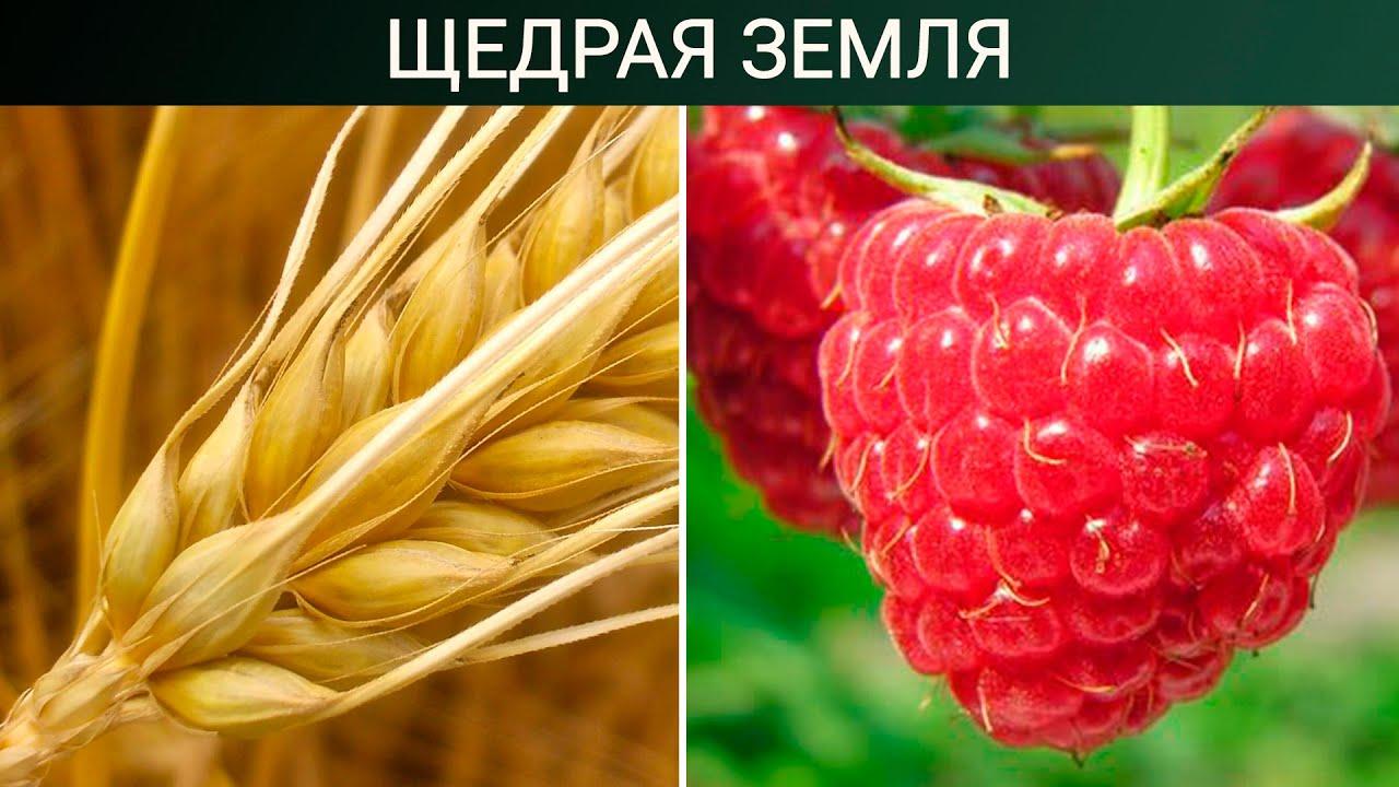 Сельхозкультуры, по которым Россия мировой лидер