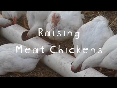 Raising Meat Chickens  - The Film, Featuring Marjory Wildcraft