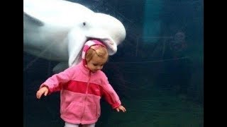 TRY TO STOP LAUGHING CHALLENGE - Funny WATER ANIMALS