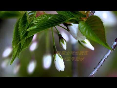 鄧麗君- 幾多愁 , 阿里山花季A ,Taiwan  720P HD