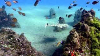 Il mondo sott'acqua
