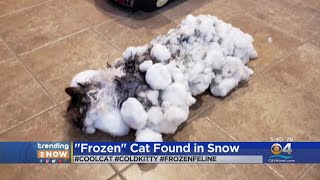 Trending: Frozen Cat