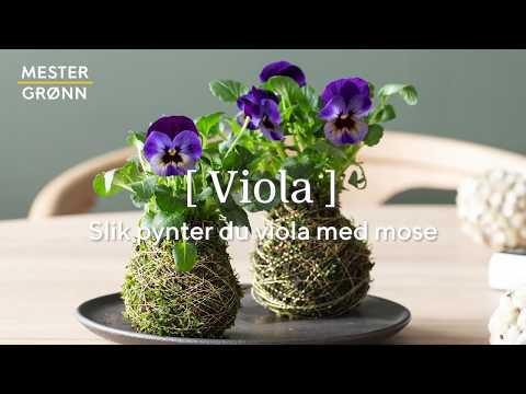 DIY: Slik pynter du viola med mose
