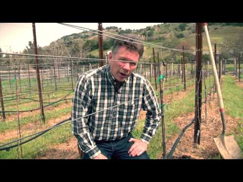 One Acre Napa Valley - Yountville AVA Episode 11 - Spring 2013 Training