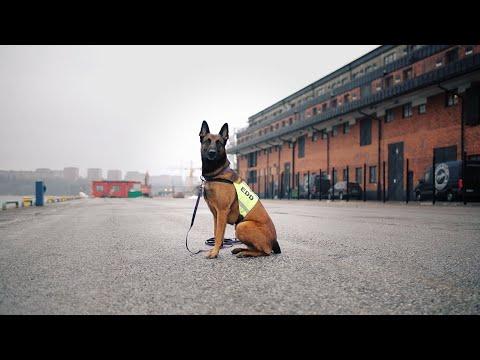 EDD/NDD - Specialsökhundar