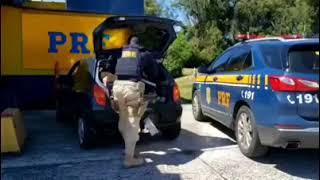 Com mais de 40 ocorrências em seu histórico, traficante de 33 anos é preso pela PRF na BR-116, em Pe