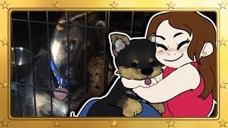 Meet Blitz's New Dog, Milla! | Video Updates!