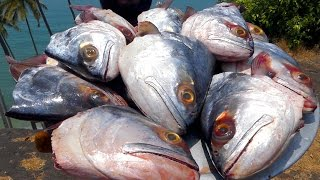 First Time in the World   Making 16 Big Fish Heads Barbecue   FISH HEAD GRILLED  BBQ street food