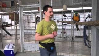 Yanick Dion - enseignant à l'art au poil entraine un perroquet à Natural Encounters en Floride