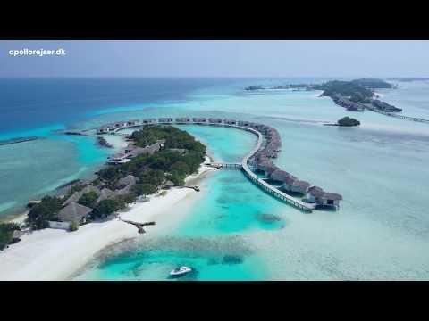 Rejser til Maldiverne - en paradisø med svajende palmer, kridhvide strande og turkisblå hav