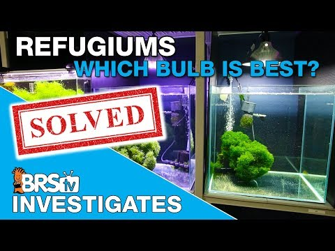 Chaeto Refugium Test phase one: What really happened and what's next?  | BRStv Investigates