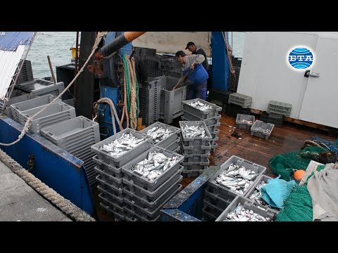 Влиянието на климатичните промени и човешката дейност  върху водните екосистеми и рибните запаси