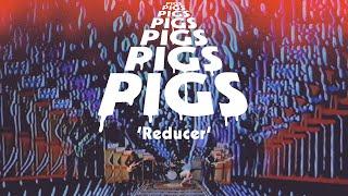 Pigs Pigs Pigs Pigs Pigs Pigs Pigs – Reducer