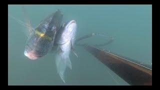 UN SALTO IN ZONA VERGINE:pescasub