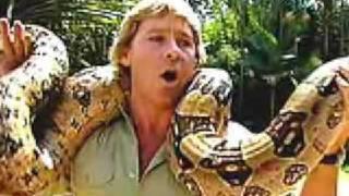 Steve Irwin6