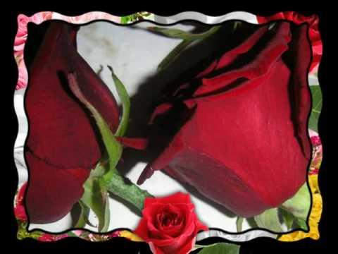 Arcadia - Rose Arcana