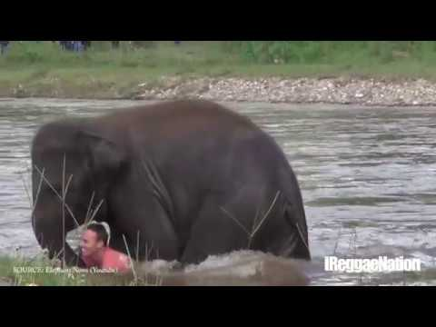 Young Elephant Rush To Save Man From Drowning