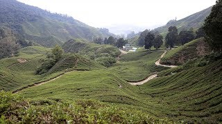Top Things to Do in the Cameron Highlands, Malaysia