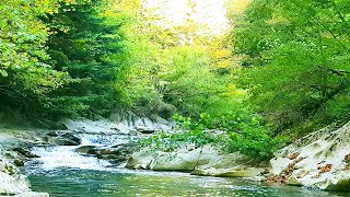 4K Cascade 5 min Forest ambience with  relaxing water sounds for Meditation, Sleep, study