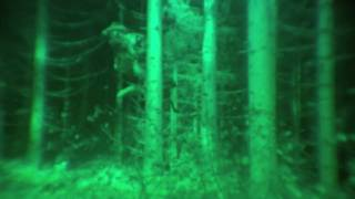 Video Clip: 'Three Headed Tr...