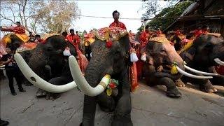 Thailand celebrates 'National Elephant Day'