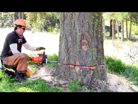 baum f llen gegen alle vorschriften problembaumf llung geht anders how not to cut down a tree. Black Bedroom Furniture Sets. Home Design Ideas