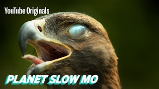 Super Slow Motion Birds