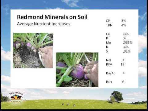 Sea minerals for soil health Jan 2013
