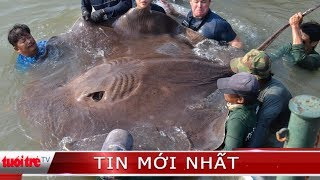 ⚡ Tin mới nhất   Bắt được cá đuối hơn 220kg