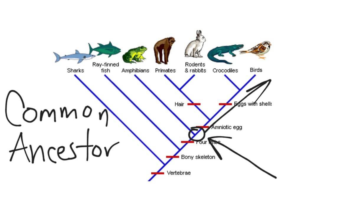 Cladogram Youtube