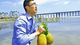THROWING PINEAPPLES IN THE OCEAN TO DO WHAT?! | Harold