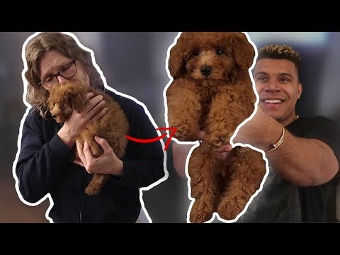 SURPRISING MY MOM WITH A PUPPY *EMOTIONAL*