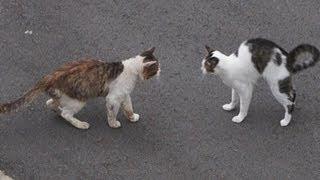 猫が友達になる瞬間