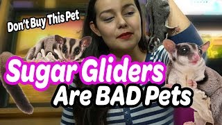 Sugar Gliders are Bad Pets | Why NOT to Buy a Sugar Glider