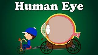 Human Eye | It's AumSum Time
