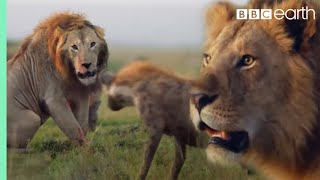 ONE HOUR of Amazing Animal Moments | BBC Earth