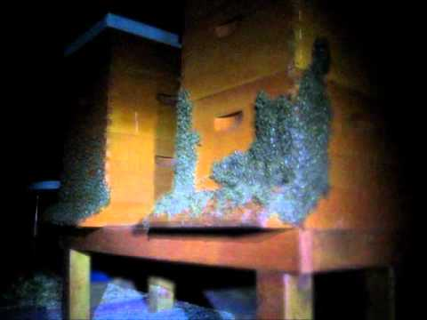 Backyard Beekeeping Part 18(S2:E4): Bee Curtain