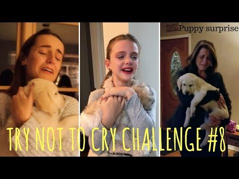 TRY NOT TO CRY CHALLENGE #8, Puppy surprise