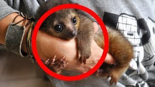 CUTEST Exotic Pets You Can Legally Own!
