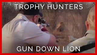 Heartbreaking Moment Trophy Hunters Slay a Captive-Bred Lion