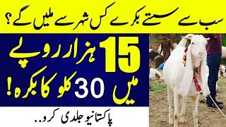 Now purchase Most Cheap Goats and Cows in Pakistan for Eid