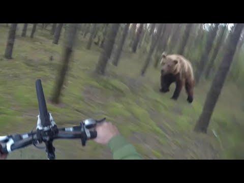 Вообичаен ден ден во шумата, кога одеднаш се појавува гладна мечка…