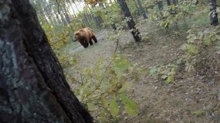 Bikers Rio Pardo | Vídeos | Pedalalar ou morrer... Ataque de um grande urso marrom a um ciclista