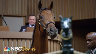 Champions born, bred and bid on in Kentucky   All In: Road to the Breeders' Cup Classic   NBC Sports