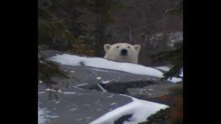 Polar Bear Police Force