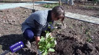В Детском парке посадили деревья и кустарники