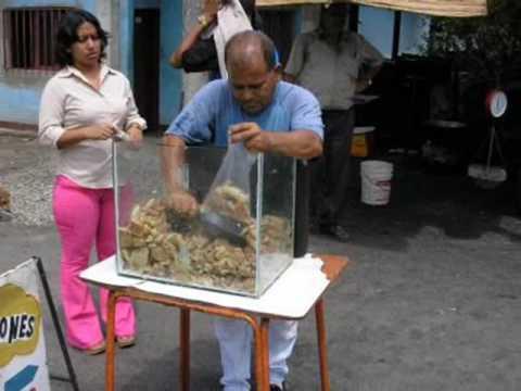 Caracas Caracas Vallenato video