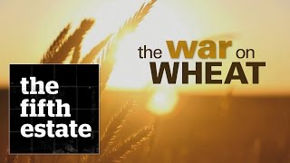 The War on Wheat - the fifth estate