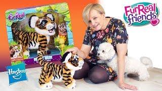 Interaktywny Tygrys Tyler, Furreal Friends, Hasbro